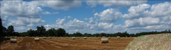 Hay bales in Norfolk County, investment properties for sale on the Gold Coast south coast of Ontario